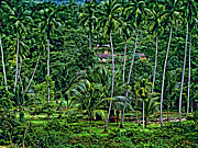 Rice Paddy Prints - Jungle Life Print by Steve Harrington