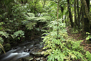 Rainforest Prints - Jungle stream Print by Les Cunliffe