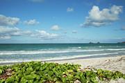 Charmian Vistaunet - Kailua Beach