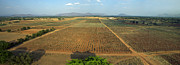 Agronomy Photos - Karnataka, Vineyards by Nicolas Chorier