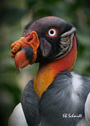 Mayan Mythology Posters - King Vulture Poster by E B Schmidt