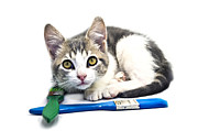 Susan Leggett Prints - Kitten with Paint Brushes Print by Susan Leggett