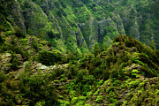 Charmian Vistaunet - Koolau Ridges