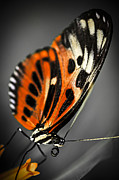Antenna Metal Prints - Large tiger butterfly Metal Print by Elena Elisseeva