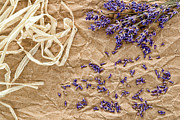 Wrap Posters - Lavender Flowers and Seeds Poster by Olivier Le Queinec