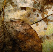 Sepia Posters - Leaf Patterns Poster by Shirley Sirois