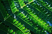 Home Decor Prints - Leaves of Green  Print by Neal  Eslinger