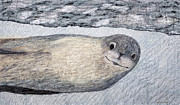 Featured Originals - Leopard Seal by Patricia Gould