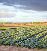 Tim Hester - Lettuce Farm