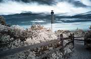 Barnegat Lighthouse Framed Prints - Lighthouse Walk Framed Print by John Rizzuto
