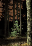 Dirk Ercken - Lightpainting The Pine...