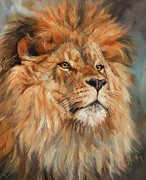 African Prints Paintings - Lion by David Stribbling