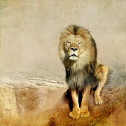 Lion Framed Prints - Lion Framed Print by Heike Hultsch
