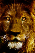 Tilly Art Posters - Lion Portrait Poster by Tilly Williams