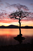 Lone Tree Posters - Loch Lomond Sunset Poster by Grant Glendinning