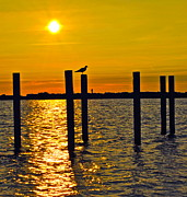 Alight Acrylic Prints - Lone Gull Acrylic Print by Robert Harmon