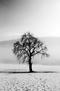 Misty Landscape Posters - Lone tree in the snow Poster by Grant Glendinning