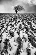 Fresh Snow Framed Prints - Lone tree Framed Print by John Farnan