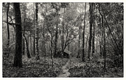 Black And White Rural Photography Prints - Lonely Hut In Deep Forest Print by Setsiri Silapasuwanchai
