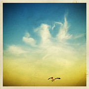 Wind Photo Metal Prints - Lonely Seagull Metal Print by Setsiri Silapasuwanchai