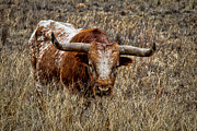Longhorn Photos - Longhorn by Tony Grider
