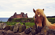 Gass Framed Prints - Lovely horse and Tantallon Castle Framed Print by RicardMN Photography
