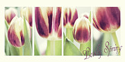 Tulip Mixed Media - Lovely Spring by Angela Doelling AD DESIGN Photo and PhotoArt