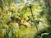 Forestation Framed Prints - Lush green rainforest along Pororai River NZ Framed Print by Stephan Pietzko