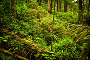 Log Photos - Lush temperate rainforest by Elena Elisseeva