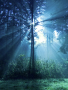 Forest Light Posters - Magical Light Poster by Daniel Csoka