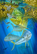 Sportfishing Painting Posters - Mahi Mahi Hunting In Sargassum Poster by Terry  Fox