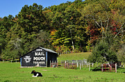 Randolph County Posters - Mail Pouch Barn Poster by Thomas R Fletcher