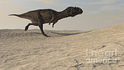 Running Digital Art - Majungasaurus Running Across A Barren by Kostyantyn Ivanyshen