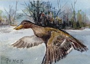 Aceo Original Originals - Mallard Hen aceo by Virginia Potter