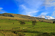 Graze Posters - Mallerstang Dale looking east to Mallerstang Edge Poster by Louise Heusinkveld