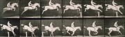 Equestrian Prints Prints - Man and horse jumping a fence Print by Eadweard Muybridge