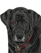 Black Lab Mixed Media - Mans Best Friend by Karen Sheltrown
