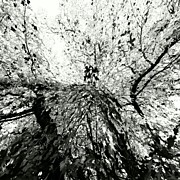 Trees Art - Maple Tree Inkblot by CML Brown