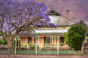 Mark Richards - McHenry Street Jacarandas