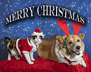 Animals At Christmas Posters - Merry Christmas Poster by Melany Sarafis