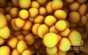 Positive Image Prints - Microscopic View Of Staphylococcus Print by Stocktrek Images