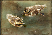 Baby Mallards Framed Prints - Mini Quackers Framed Print by Fraida Gutovich