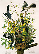 Forest Bird Paintings - Mocking Birds and Rattlesnake by John James Audubon