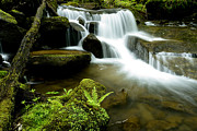 Trout Photo Posters - Monongahela National Forest Waterfall Poster by Thomas R Fletcher