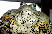 Gail Matthews - Monster Toad