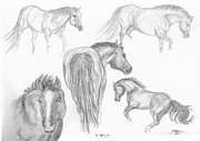 Animals Drawings - Moods of Zip by Cheryl McKeeth