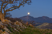 Moon Set Prints - Moon Over Mt Diablo Print by Marc Crumpler