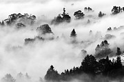 Morning Fog Prints - Morning Fog - Marin Headlands Print by David Yu