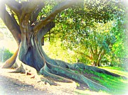 Tree Roots Digital Art Prints - Morton Bay Fig Tree Print by Leanne Seymour