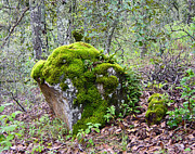 All - Mossy Rock by Sue Sill